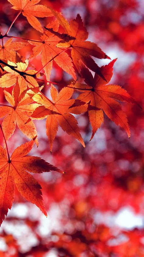 mt fall leaf red mountain bokeh papersco