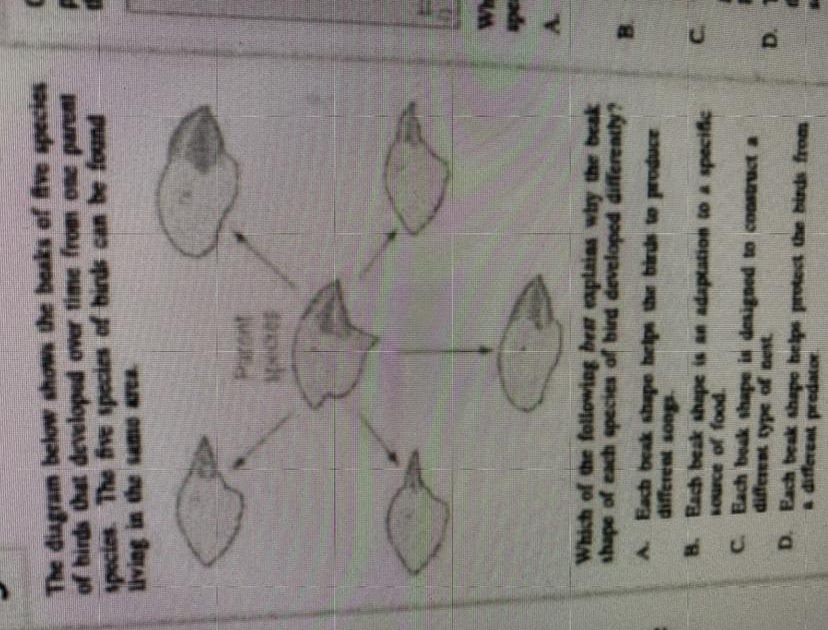 Help Giving Commonlit Answer Key - DN Tech and Integration