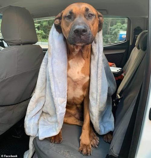 Perro fiel no se aparta de su dueño moribundo esperando ayuda, pero fue tarde para ambos