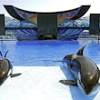 SeaWorld sees profits plunge 84% as customers desert controversial park