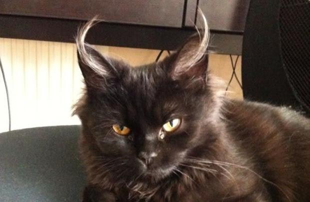 Download 63+  Gambar Kucing Seram Paling Imut