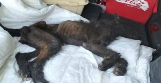 La Guardia Civil detiene a una mujer que dejó morir a su perro de hambre