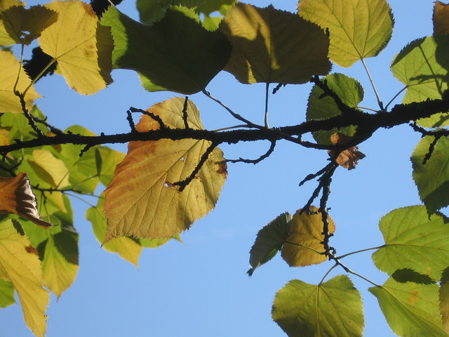 leaves_changing_colo_8-28