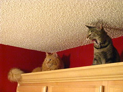 Maggie joins Jasper on top of the cabinets