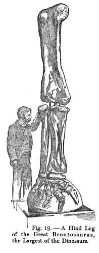 A Gentleman and a Hind Leg