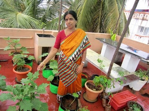 Devaki's Tips For Setting Up A Terrace Container Garden!