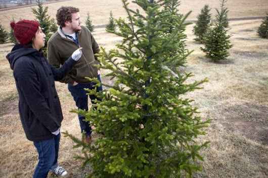 Picking the perfect Christmas tree and tips to keep it that way