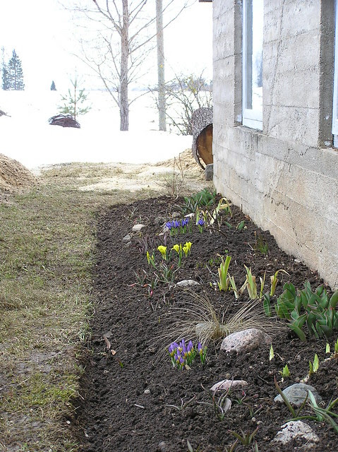 Spring Bulbs Bed