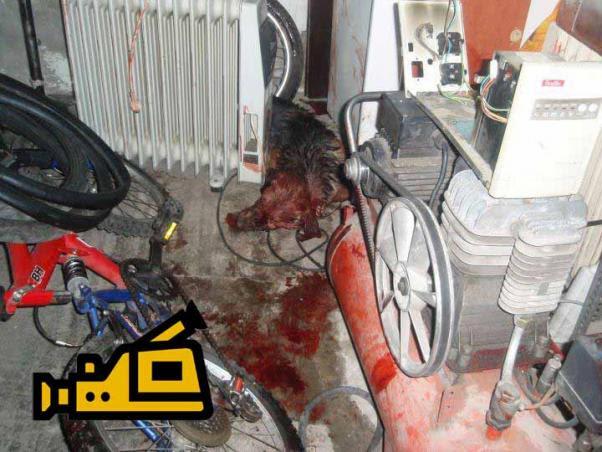 skylos kakopoiisi Το βίντεο με τον ξυλοδαρμό του  Αλβανού που σκότωσε δύο σκυλιά με βαριοπούλα