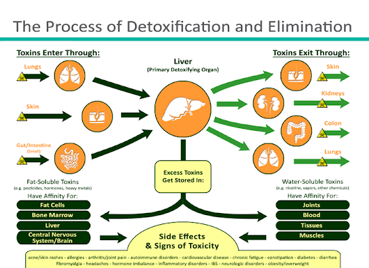 Detoxification 101: The basic science behind cellular detoxification