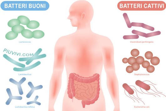 Probiotici E Salute Dell'Intestino