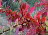 fall colors :: høstfarger #1 :: 15-09.08