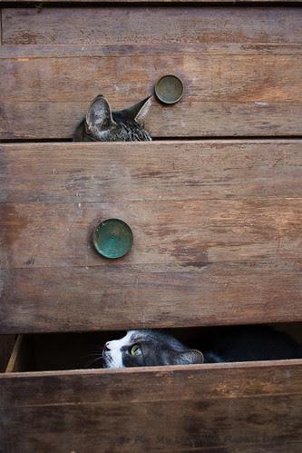Dresser-8219
