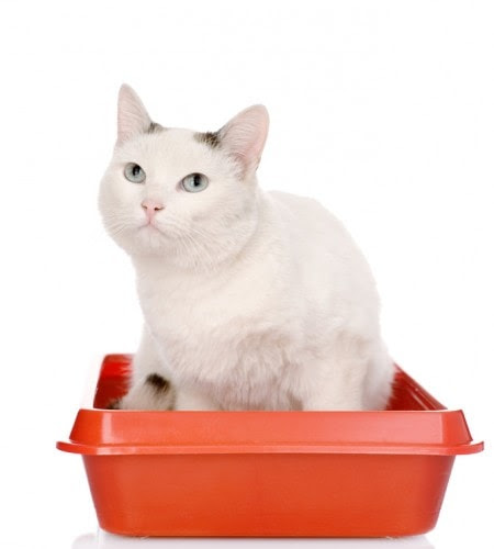 What to Do When Your Cat Pees Outside the Litter Box