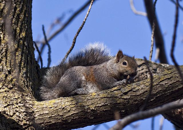 squirrel cutie