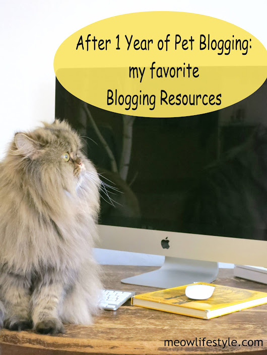 1 Year Blog Anniversary - Blogging Favorites | Meow Lifestyle