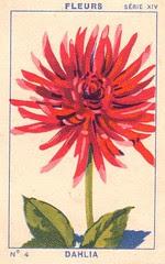 milliat fleurs006