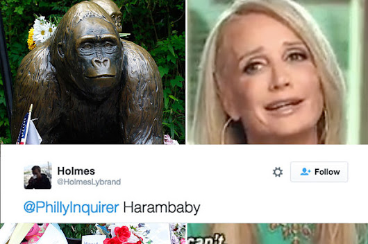 In The Least Surprising News Ever, People On The Internet Want To Name A Baby Gorilla After Haram