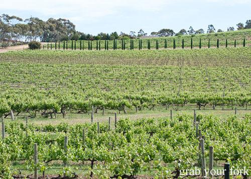 alpha box and dice vineyard mclaren vale south australia