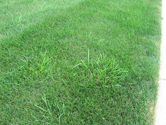 Lawn Care Tips - How to Choose Grass Seed for Your Lawn