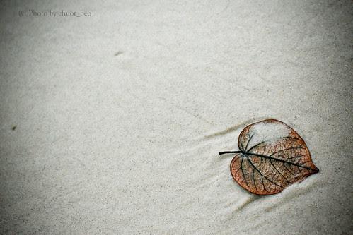 Heart of the Ocean..