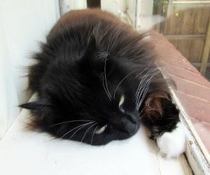 lie-cat