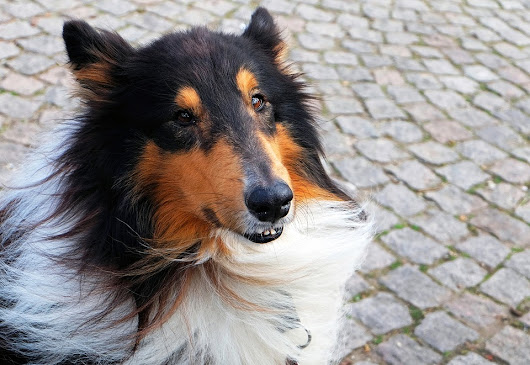 5 Most Popular Family Dog Breeds | Jaycliffe Kennels & Cattery News