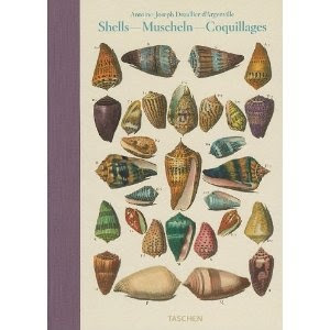 Conchology/Shells