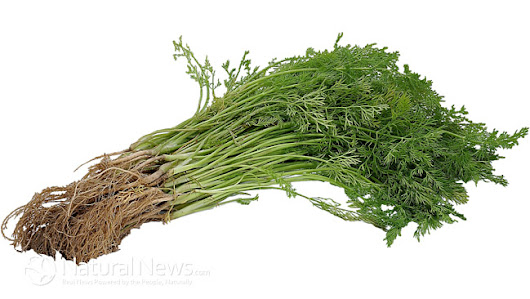 12 Surprising Health Benefits Of Parsley - Natural News Blogs