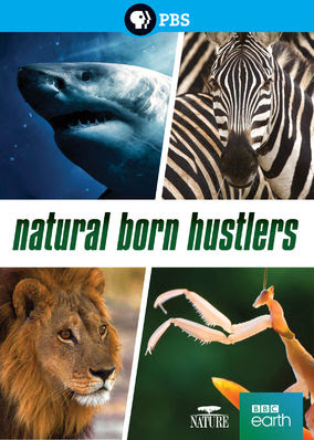 NATURE: Natural Born Hustlers - Season 1