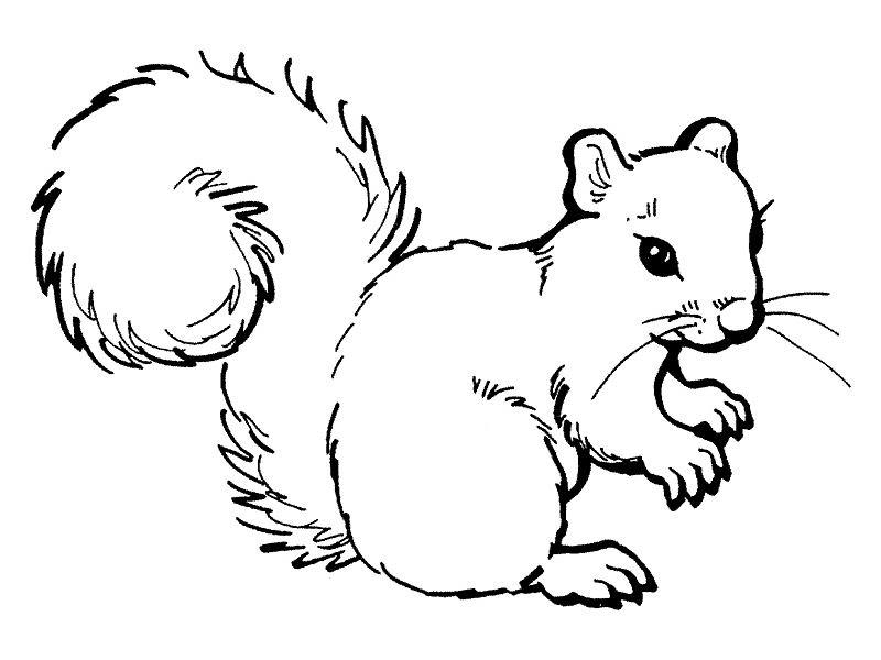 67 Dessins De Coloriage écureuil à Imprimer Sur Laguerchecom Page 1