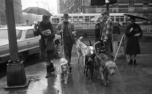 Jim Buck, Who Made Walking Dogs a Job, Dies at 81