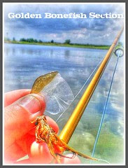 goldenbonefish4