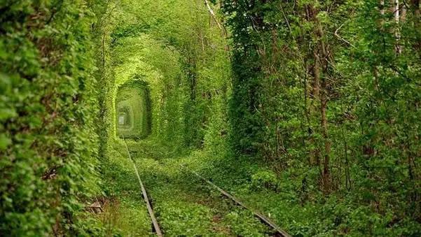 Los 10 Túneles De árboles Más Bellos Del Mundo Parte 1 Planeta