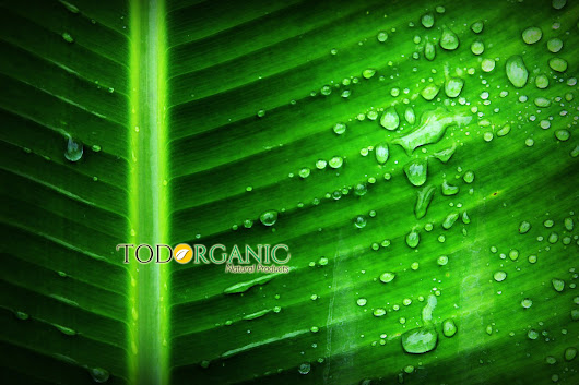 Benefits of Chlorophyll for our health - Todorganic