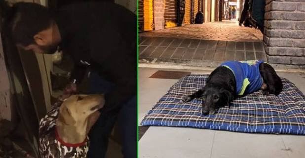 Delhites Are Helping Stray Dogs In Chilling Winters By Donating Sweaters, Blankets And Even Beds