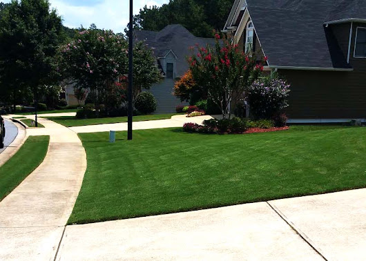 Common Summer Weeds in Dallas Ga - Lawn Care Dallas Ga