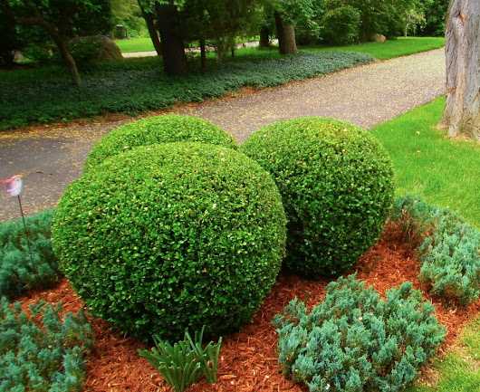 Shrubbery Pruning, Tree Trimming, Snow Removal - Ann Arbor - Ypsilanti MI