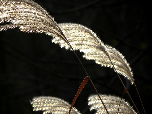 Pretty Shimmering Weeds