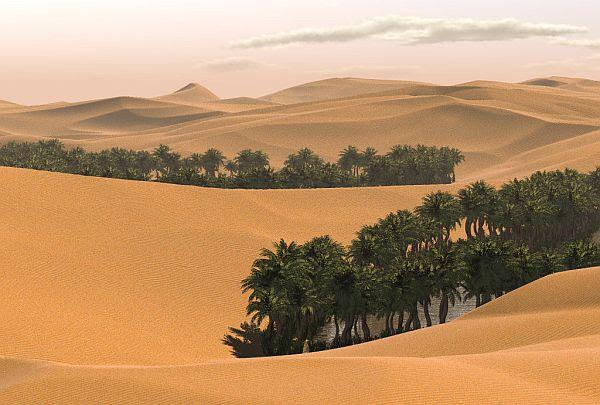 Desert forest