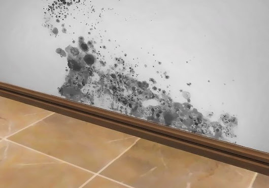 Cleaning And Killing Black Mold With Common, Non-Toxic, Household Products - Janitorial Services