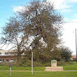 Treaty Oak (Austin, Texas) - Wikipedia, the free encyclopedia