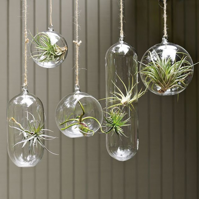 Shane Powers Hanging Glass Bubble Collection - contemporary ...