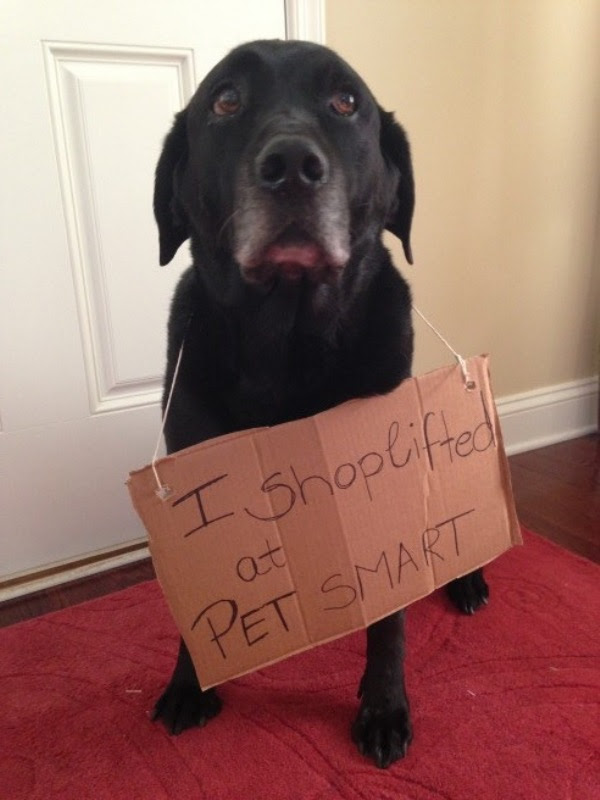 guilty-dogs-3