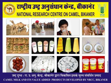 Camel milk& its value added products | Indian Council of Agricultural Research