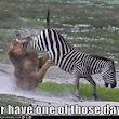 Some Days You're the Zebra, Some Days You're the Lion