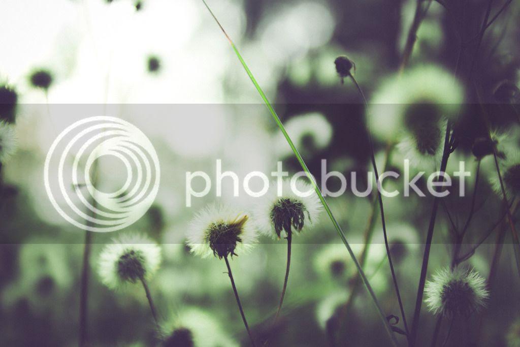 photo tumblr_nwn4hxszo61ri06y7o1_1280_zpsycf1ntnk.jpg