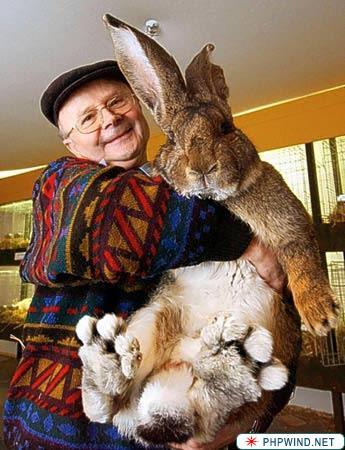 El conejo más grande del mundo 2