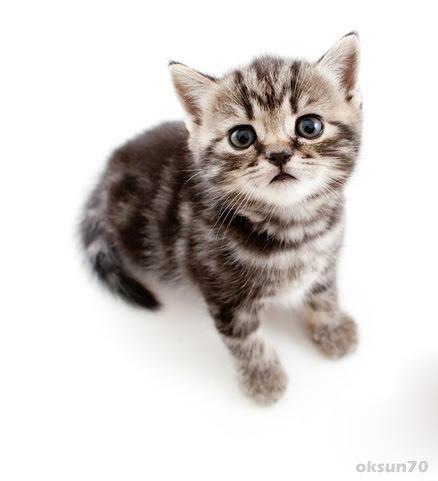 Bild vom Katzenbaby - Viele süße Katzenbilder und ...