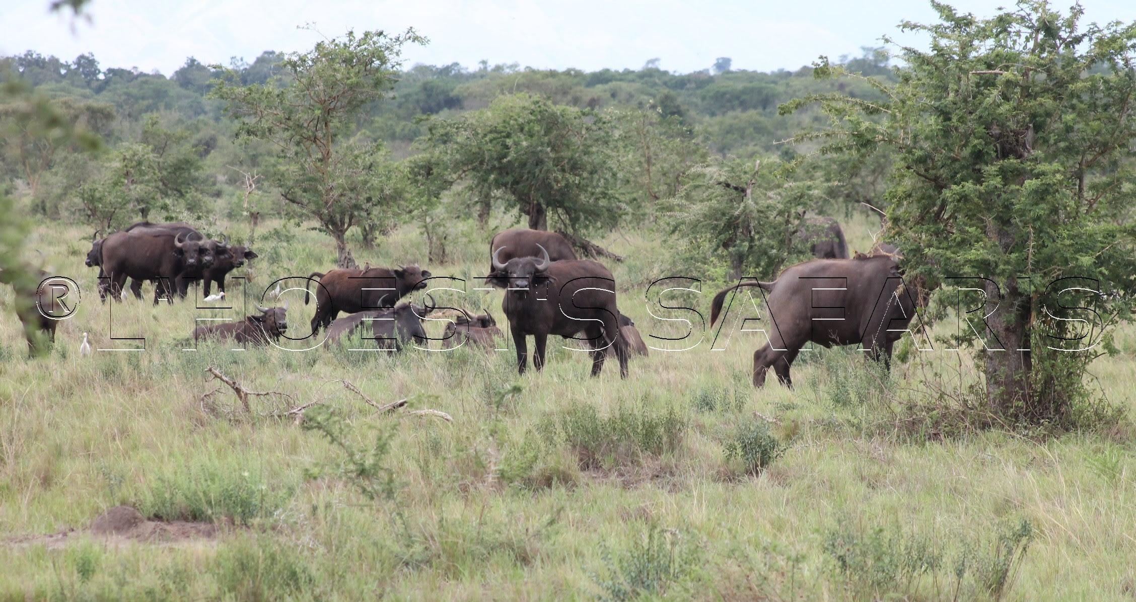 8 Days uganda wildlife tour